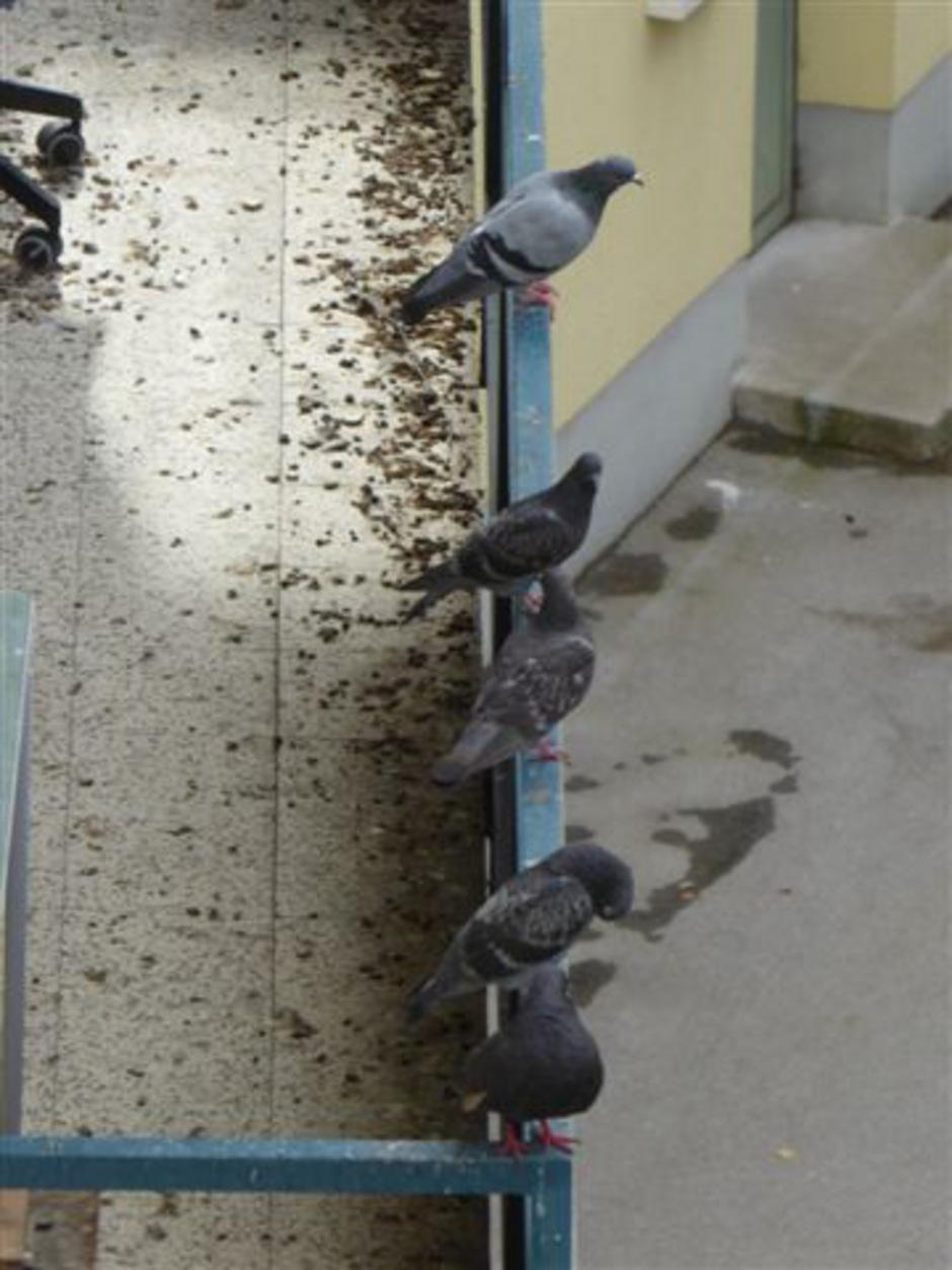 Tauben auf dem Geländer, ein total verkoteter Balkon und ein Nest im Eck: Nachbarn sorgen sich um ihre Gesundheit.