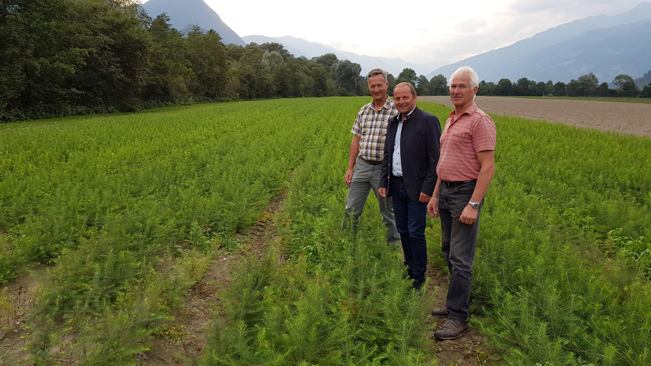 Landesforstdirektor Josef Fuchs, LHStv Josef Geisler und der Leiter des Landesforstgartens Nikolsdorf, Anton Schett, freuen sich, einen wesentlichen Beitrag für die Wiederaufforstung der sturmgeschädigten Waldgebiete im Trentino leisten zu können.