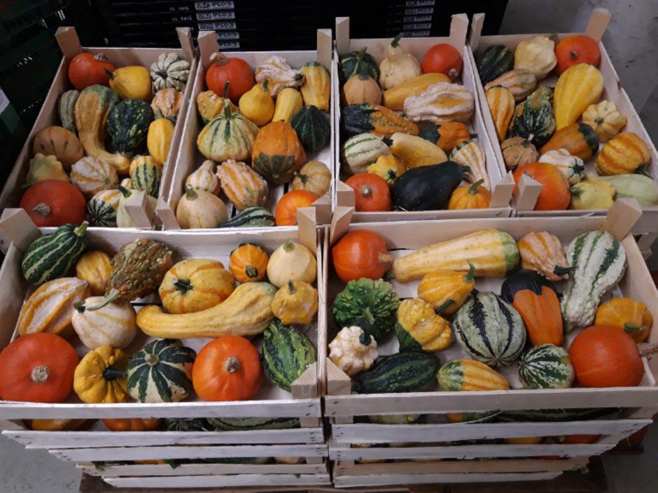 Verliefert wird das Gemüse in Kisten. Ein Halloween-Kürbis hätte aufgrund seiner Größe darin nicht Platz.
