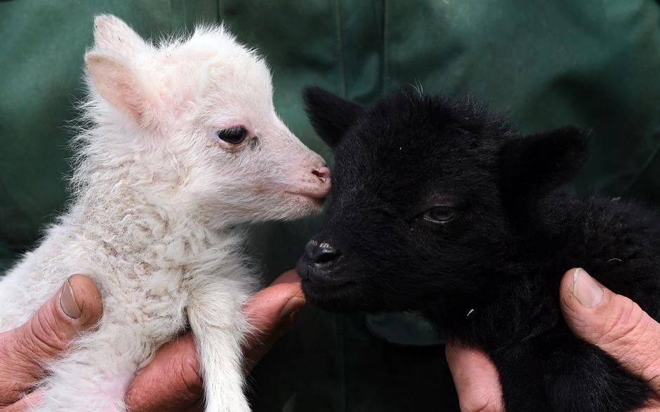 """Was Tiere zu essen tatsächlich bedeutet, führt die neue britische TV-Show """"Meat the Familiy"""" drastisch vor Augen."""