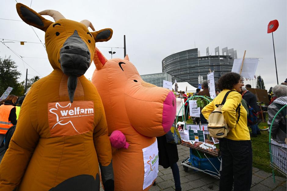 Artgerechte Tierhaltung gehörte zu den zentralen Forderungen.