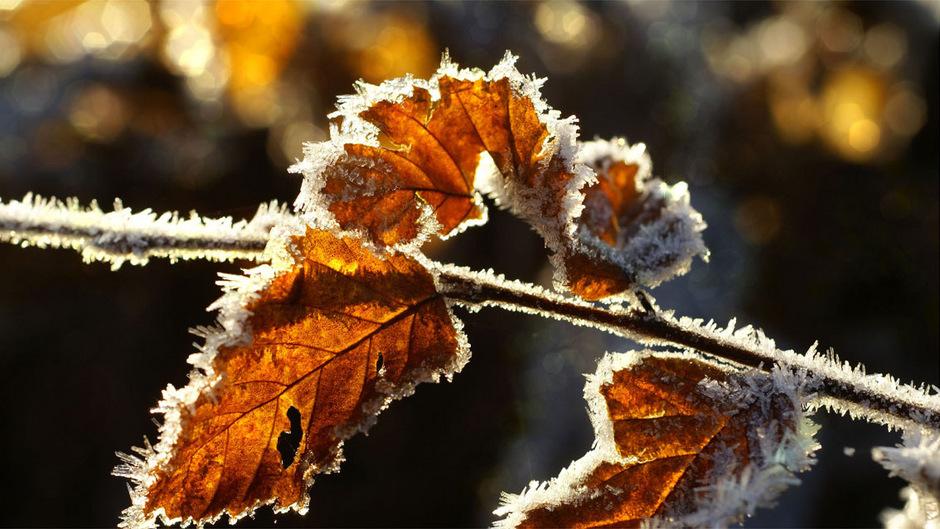 Mit der Zeitumstellung wendet sich das Blatt – wettertechnisch wird es in der neuen Woche frisch und frostig.