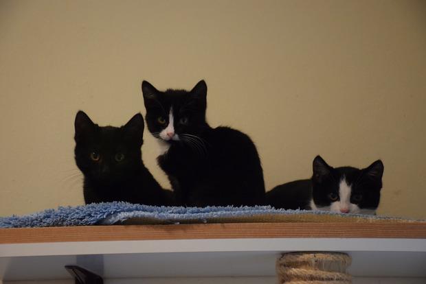An die 150 Babykatzen – manchmal samt Mutter – wurden heuer schon im Wörgler Tierheim aufgepäppelt und vermittelt.