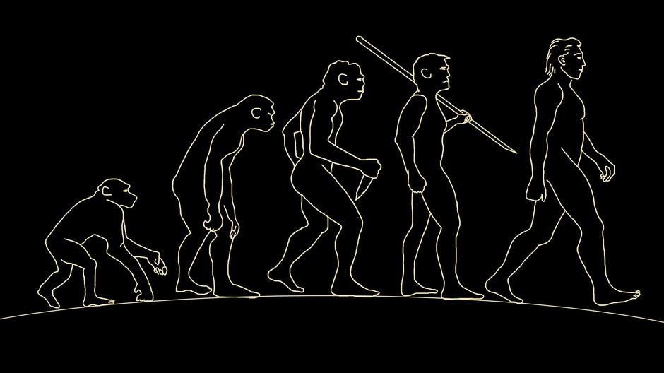 Der neu entdeckte mögliche Vorfahr von Mensch und Menschenaffe konnte sich bereits vor fast zwölf Millionen Jahren auf zwei Beinen fortbewegen. (Symbolbild)