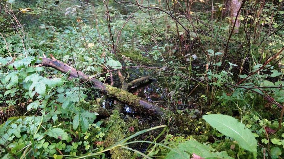 Der Tümpel im Feuchtbiotop stellt einen schützenswerten Lebensraum dar.
