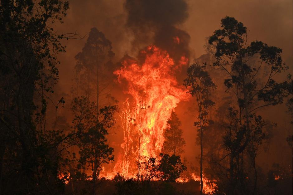 Waldbrand in Bobin, etwa 350 Kilometer nördlich von Sydney.