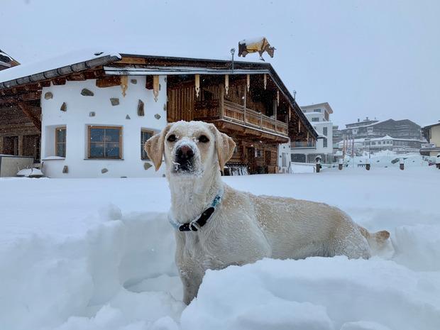 """Freud und Leid lagen am Mittwoch nahe beieinander: """"Locke"""" freute sich in Kühtai über den Neuschnee und tobte über die Terrasse beim Dorfstadl."""
