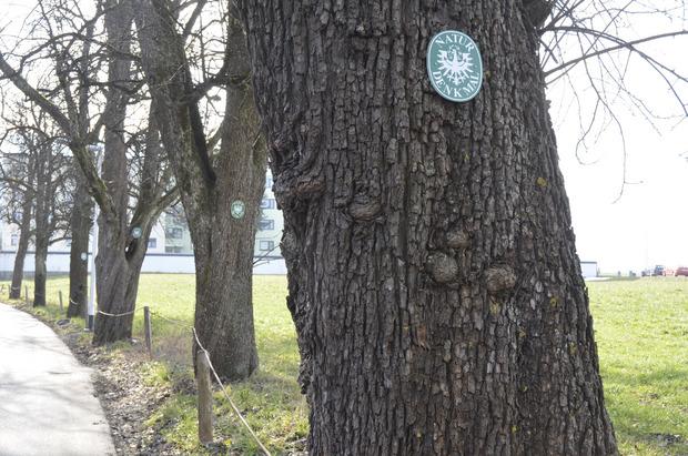 Die Birnbaumallee (l., Archivbild) beim ehemaligen Zöhrer-Areal zog früher viele Blicke auf sich.