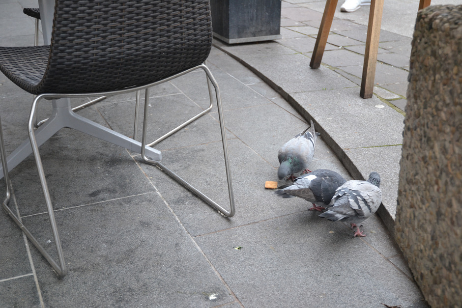 In der Wörgler Bahnhofstraße fühlen sich die Tauben wohl.