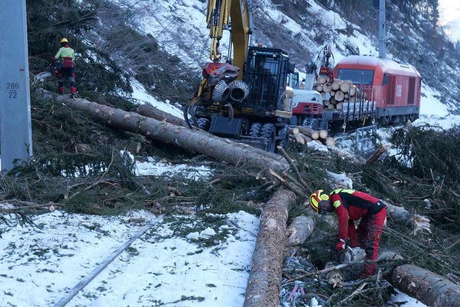 Holzfachleute arbeiten derzeit mit schwerem Gerät an der Räumung der umgestürzten Bäume. Der Abtransport erfolgt per Dieselzug.
