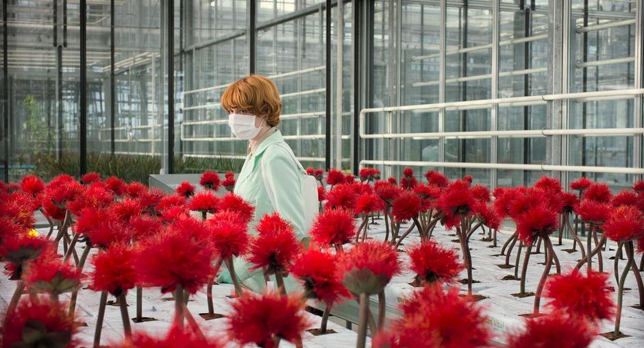 """Rote Blumen auf dem Roten Teppich: Szene aus Jessica Hausners Film """"Little Joe""""."""